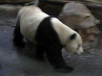 Пекин. Зоопарк и аквариум