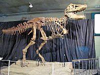 Выставка эра динозавров в Улан-Удэ