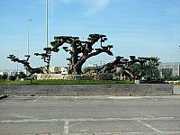 Старое оливковое дерево. Возраст около 200 лет